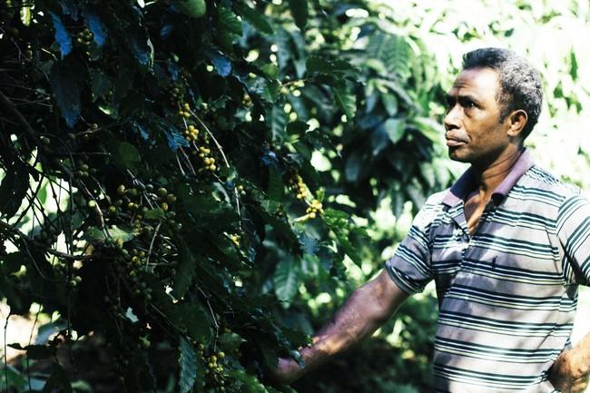 コーヒー豆を育てるインドネシア農家